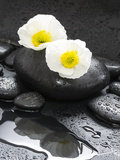 White Blossoms on Black Stones Photographic Print by Uwe Merkel