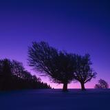 Winter-Landscape, Trees, Red-Beech, Fagus Sylvatica, Twilight Photographic Print by Herbert Kehrer
