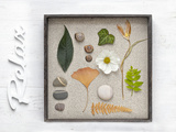 Still Life, Frames, Collection, Natural Materials, Stroke, 'Relax' Photographic Print by Andrea Haase
