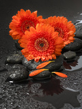 Red Blossoms on Black Stones Photographic Print by Uwe Merkel