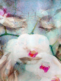 Close-Up Portrait of a Womans Face with Closed Eyes with White Orchid and Texture Photographic Print by Alaya Gadeh