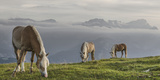 Haflinger Horses on the Summer Pasture at Wank Area Photographic Print by Martin Kriner