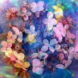 Colorful Translucent Layer Work from Orchid and Hydrangea Photographic Print by Alaya Gadeh