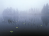 Norway, Aust-Agder, Mavatn Lake, Fog Mood at a Forest Lake Photographic Print by Andreas Keil