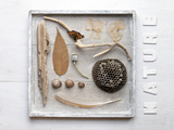 Still Life, Frames, Collection, Natural Materials Photographic Print by Andrea Haase