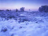 Belgium, High Fens, Hautes Fagnes, High Fens-Eifel Nature Park, Moor in Winter before Sunrise Photographic Print by Andreas Keil