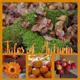 Collage with Autumnal Motifs Photographic Print by Andrea Haase