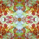 A Montage of Flowers and Seashells Turned into a Mandala Photographic Print by Alaya Gadeh