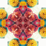 Symmetric Ornament from Flowers, Photographic Layer Work Photographic Print by Alaya Gadeh