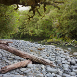 Cleddau River, Trunk, Fiordland National Park, Southland, South Island, New Zealand Photographic Print by Rainer Mirau