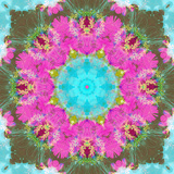 Colorful and Symmetric Photographic Layer Work of Blossoms Photographic Print by Alaya Gadeh