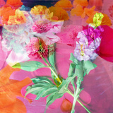 Montage of Flower Photographies Photographic Print by Alaya Gadeh
