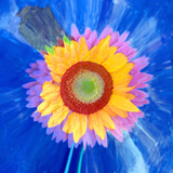 Montage of a Sunflower and Dahlia Photographic Print by Alaya Gadeh
