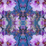 Symmetric Ornament from Flowers and Water Reflections Photographic Print by Alaya Gadeh