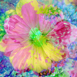 Composing with Coloured Blossoms Photographic Print by Alaya Gadeh