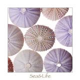 Maritime Still Life, Urchin Shell Photographic Print by Uwe Merkel