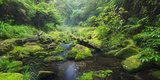Rain Forest, Omanawa Gorge, Bay of Plenty, North Island, New Zealand Fotografisk tryk af Rainer Mirau