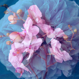 A Delicate Floral Montage from Blooming Orchids and Rose Photographic Print by Alaya Gadeh