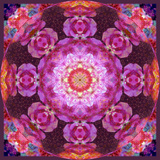 Mandala Ornament from Red Blooming Orchids, Conceptual Photographic Layer Work Photographic Print by Alaya Gadeh