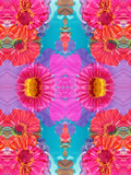 Multicolor Blossom Design from Zinnia, Gerber Daisy and Texture, Photographic Layer Work Photographic Print by Alaya Gadeh