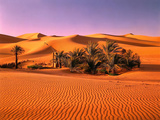 Sahara, Black Bug, Toktokkie, Sand Fotografisk tryk af  Thonig
