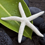 White Starfish on Green Leaf Photographic Print by Uwe Merkel