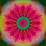 Mandala of Flower Photographies Photographic Print by Alaya Gadeh