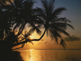Palmenstrand, Sonnenuntergang, Meer, Ufer, Palmen, Abendsonne, Urlaub Photographic Print by  Thonig