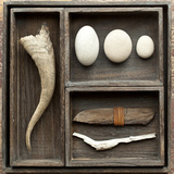 Natural Elements Collection in Type Case Photographic Print by Andrea Haase