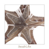Maritime Still Life with Starfishes Photographic Print by Uwe Merkel