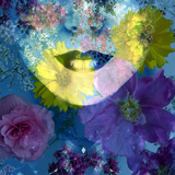 Poetic Montage of a Portrait with Colorful Floral Ornaments Photographic Print by Alaya Gadeh