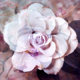 Photographic Layer Work of a White Rose Photographic Print by Alaya Gadeh