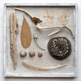 Still Life, Frame, Collection, Natural Materials Photographic Print by Andrea Haase