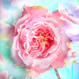 A Floral Montage of a Mallow and a Rose in Powerful Pastels, Photograph, Layer Work Photographic Print by Alaya Gadeh