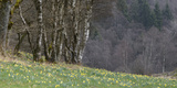 Germany, North Rhine-Westphalia, Rur Eifel (Local Recreation Area Photographic Print by Andreas Keil