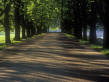 Germany, North Rhine-Westphalia, Cologne, Chestnut Avenue at the Decksteiner Weiher Photographic Print by Andreas Keil