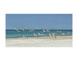 Beach Skimmers Prints by Mary Lou Johnson