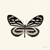 Butterfly VIII Posters af Debra Van Swearingen
