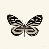 Butterfly VIII Poster von Debra Van Swearingen