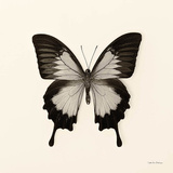 Butterfly III Kunstdrucke von Debra Van Swearingen