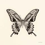 Butterfly VI Plakater af Debra Van Swearingen