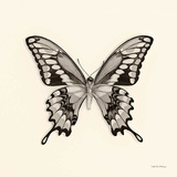 Butterfly VI Prints by Debra Van Swearingen
