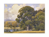 Marin Oaks Prints by Percy Gray