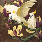 Cockatoos on Copa De Oro Prints by Jesse Arms Botke