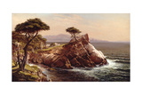 Cypress Point Prints by Raymond D Yelland