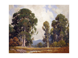 Eucalyptus Posters by Percy Gray