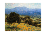 Poppies and Lupines Premium Giclee Print by Granville Redmond