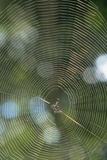Spider Web Photographic Print by  Comstock