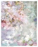 Cherry Flowers Prints by  Hoskari