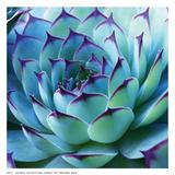 Colorful Cactus Art